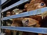 Empieza el curso de Bienestar Animal en el Transporte en la FUNDACIÓN UNED