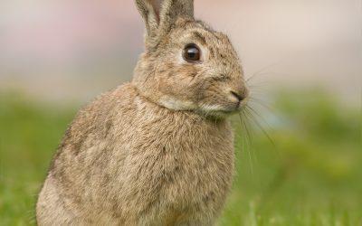 Control de Plagas Conejos